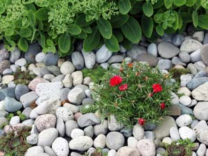 Attrayant Pebble Gardening