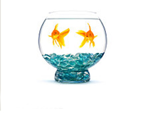 How To Pair Pet Fish In A Bowl?