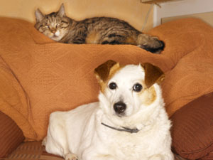 Dogs And Cats As Pets