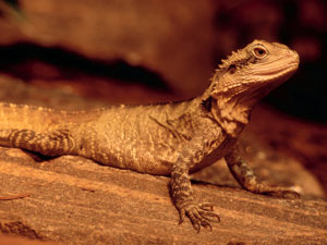 Spiritual Significance Of Lizards!