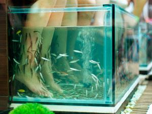 fish spa stockholm body care