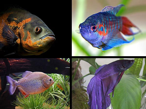 Aquarium fish that are best left alone for Best aquarium fish