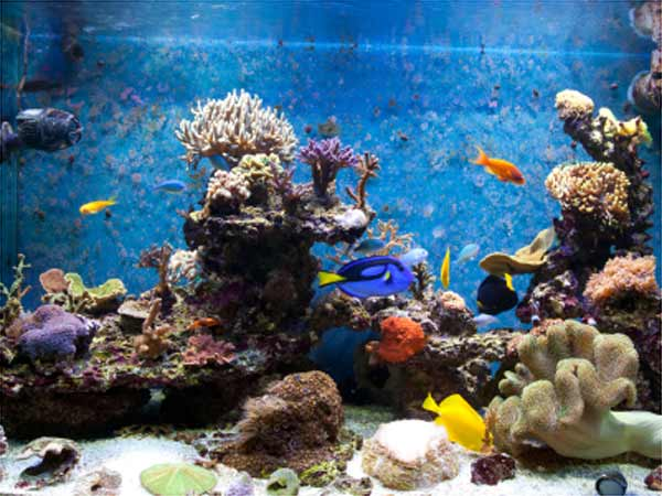How To Keep Fish Tank Cool In Summer? - Boldsky.com