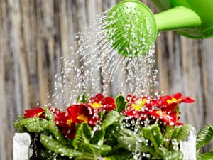 Water plants garden tips indoor garden for How to water a garden