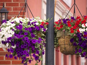 Basket Gardening In Your Home
