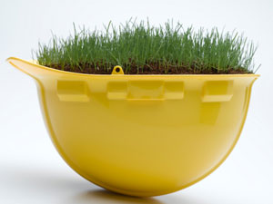 How To Grow Grass In A Container?