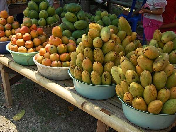 How many types of mangoes have you tasted for Pianta mango