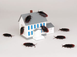 Natural Alternatives To Pest Control