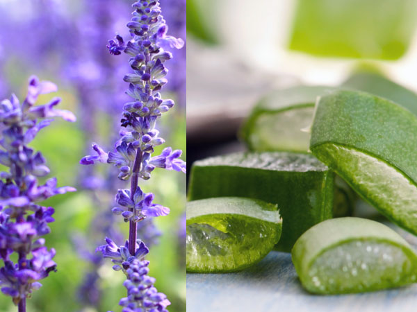 Herbs To Get Soft & Smooth Skin
