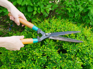 5 Different Ways To Prune Your Plants