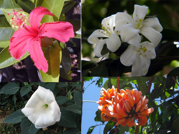 Hindu Gods & Their Favourite Flowers