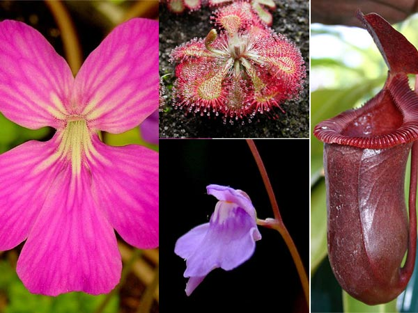 5 Carnivorous Plants To Grow