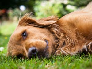 Remedies To Cure Dog's Upset Stomach