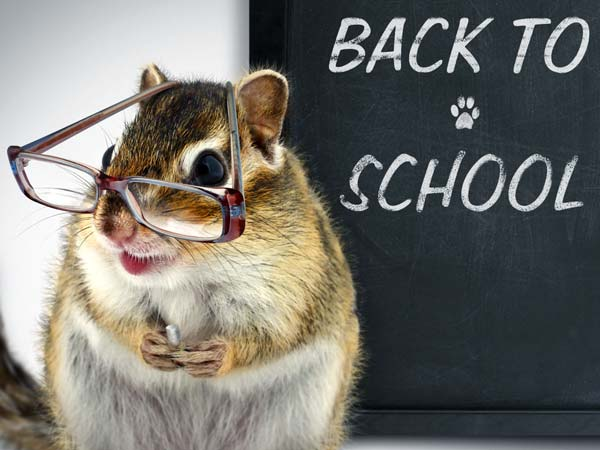 Top 10 Howlers That Became Teacher Jokes