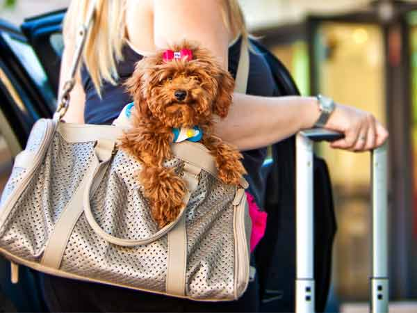 Flying Abroad With Your Pet Dog?