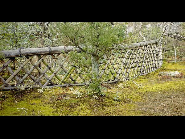 7 Plants That Are Good For Fencing
