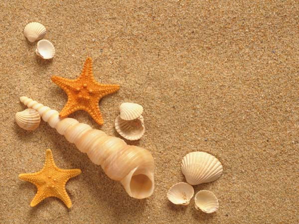 Decorate Home With Seashells: Cheap Idea