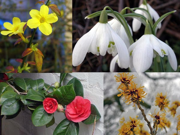 Colourful plants for winter garden - Gardening mistakes maintaining garden winter ...