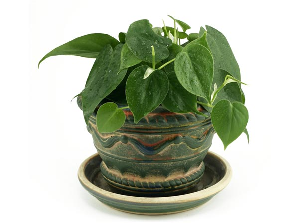 Small Indoor Plants To Decorate House Boldsky Com