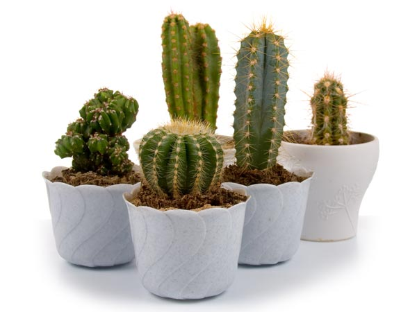 Small Indoor Plants To Decorate House