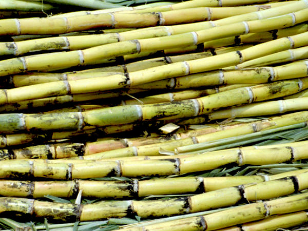 Significance Of Sugarcane In Festival