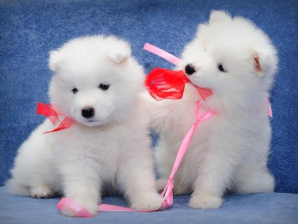 Top 10 Cutest Puppy Dog Breeds - Boldsky.com