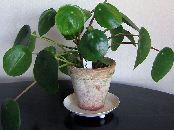 Easy To Grow Indoor Plants