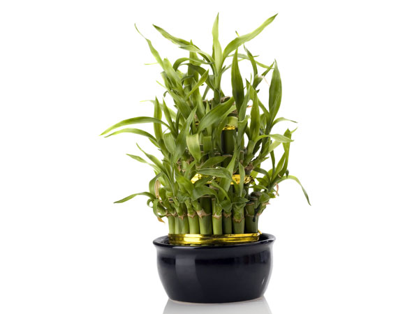 Easy to grow indoor plants for Easy indoor plants to grow