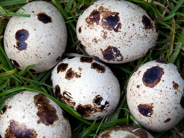 9 types of eggs that we can eat  boldsky