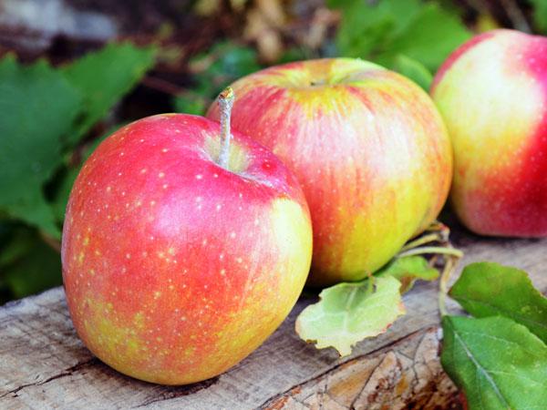 10 Fruits To Eat During Pregnancy Boldsky Com