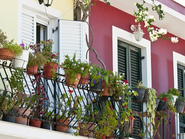 best potted plants for a balcony garden