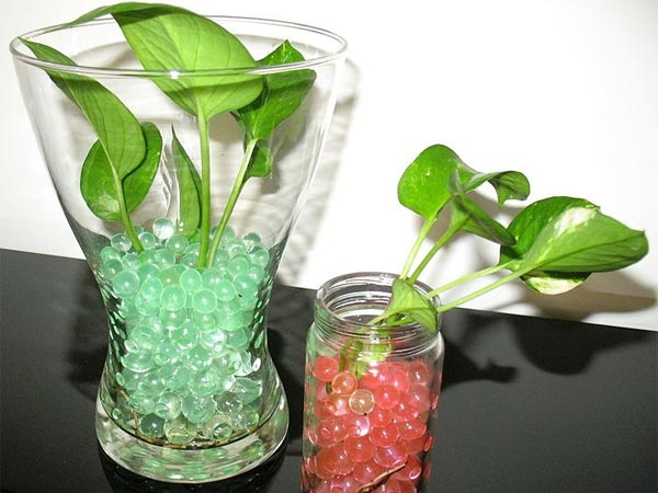 Different Ideas To Grow Money Plant