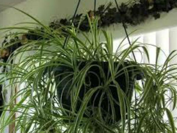 Vastu Tips To Keep Indoor Plants Boldsky Com
