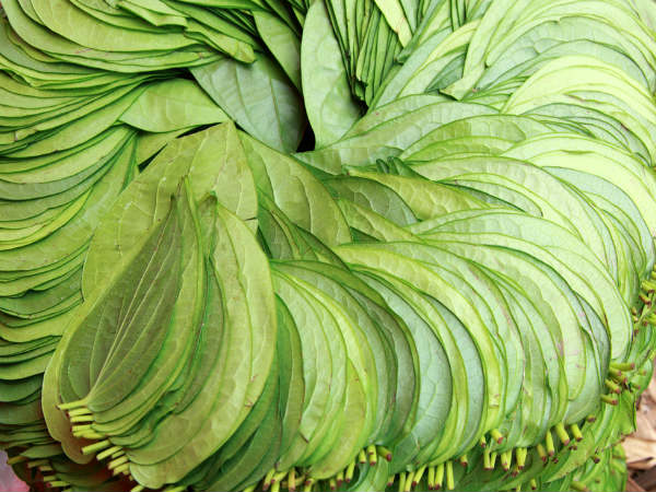 Health Benefits Of Betel Leaves