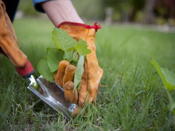 Vegetable garden for working people tips for Como quitar la mala hierba del jardin