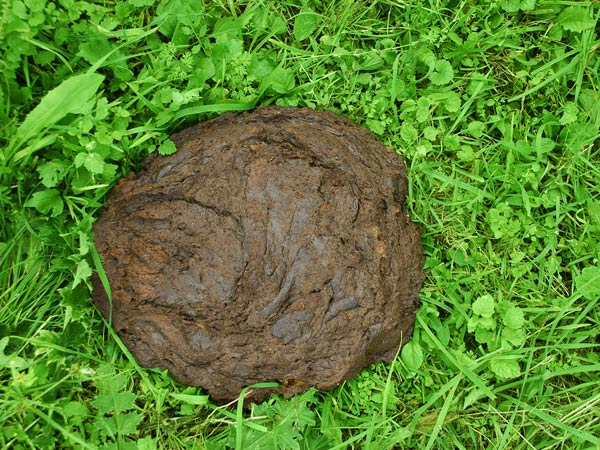 Significance Of Cow Dung In Hinduism