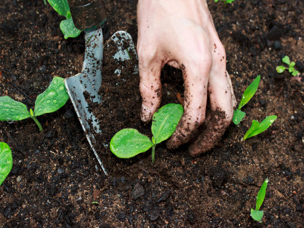 pot soil gardening tips