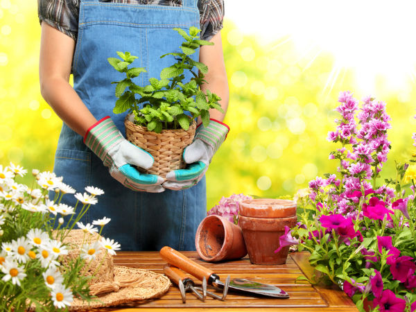 Gardening Tips For Spring Season