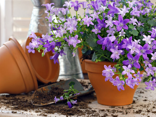 Growing flowers in pots tips for beginners for Easy to care for outdoor flowering plants
