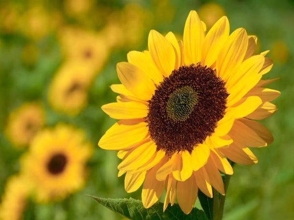 Roses In Garden: Top 10 Easiest Flowers To Grow In Your Garden
