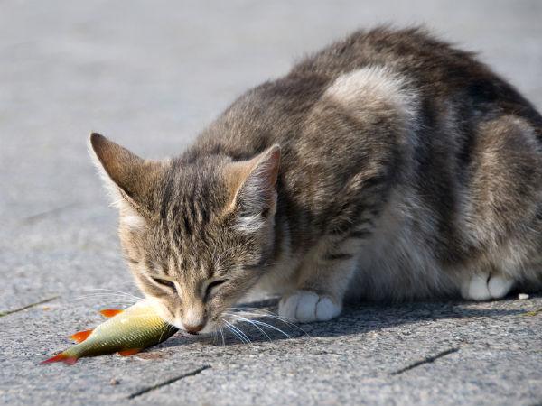 do cats get allergies