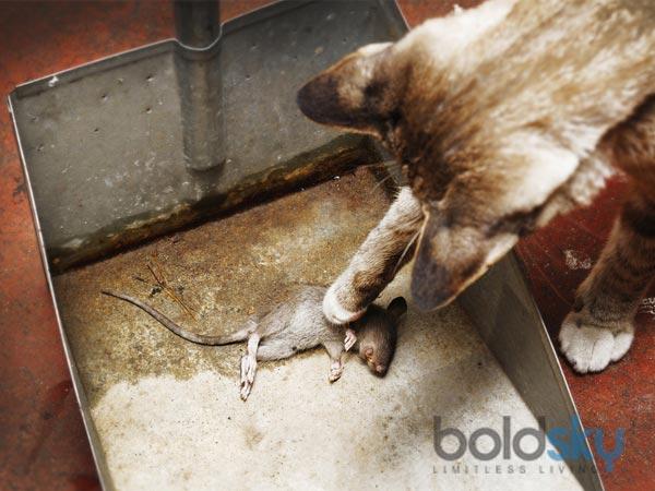 14 Ways To Kill Rats Naturally