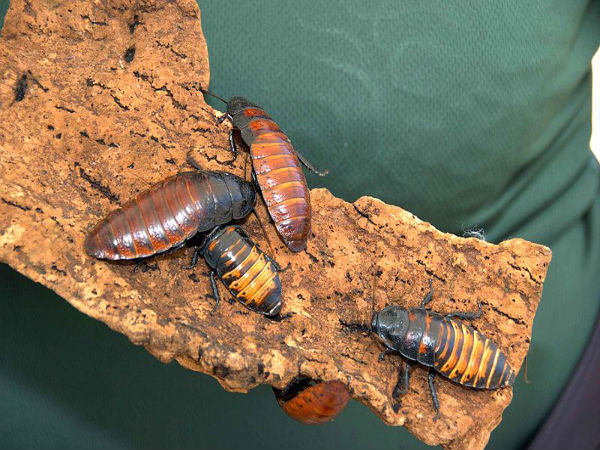 how to use boric acid to kill termites