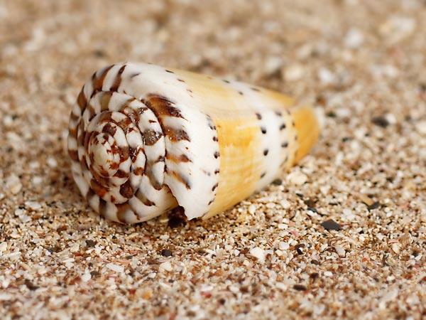 Stonefish Sting