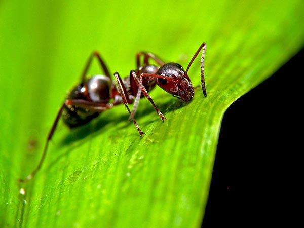 Benefits Of Having Ants In Your Garden