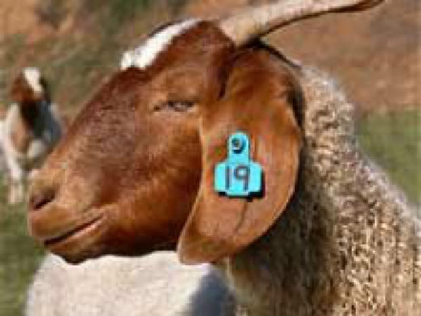 Most Interesting Facts >> Bakrid | Eid | Animal Sacrifice - Boldsky.com