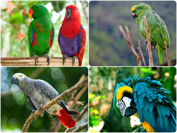 The Best Talking Pet Birds For Bird Lovers Boldsky Com