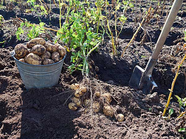 Ways To Manure A Vegetable Garden