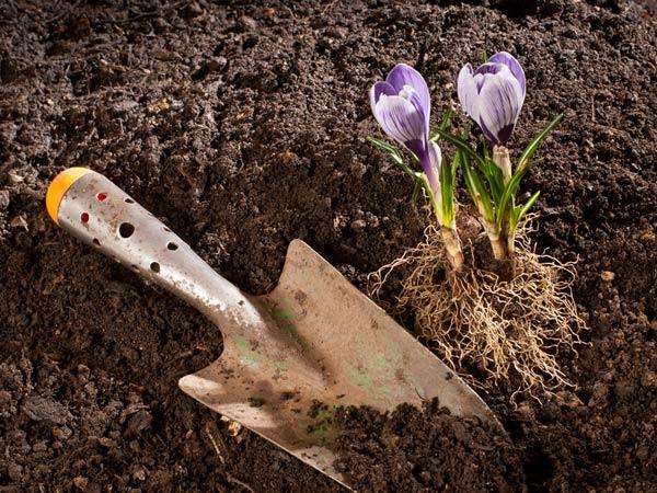 Efficient Ways To Manure A Vegetable Garden