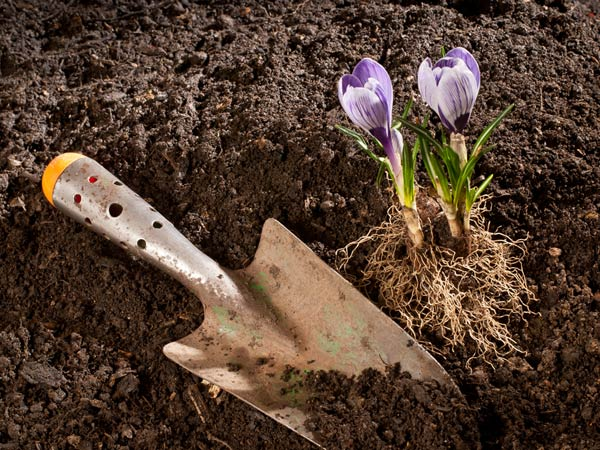 Tips to remove mold from garden soil for Black garden soil